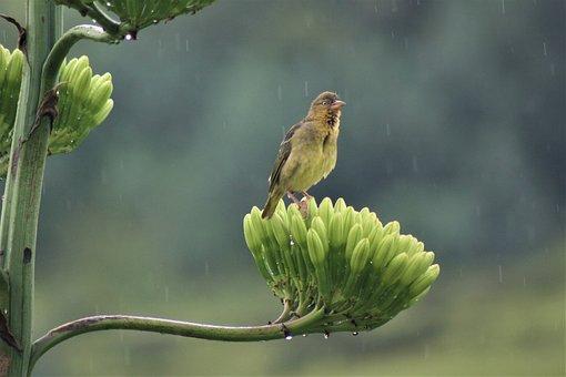 Singing, In The Rain, Flower, Finch, Bird, Watching