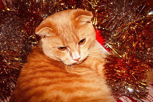 Cat, Young, Red, White, Striped, Animal, Pet, Fluffy