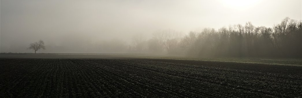 Fog, Sunrise, Background, Federal Street, B9, Sachsen