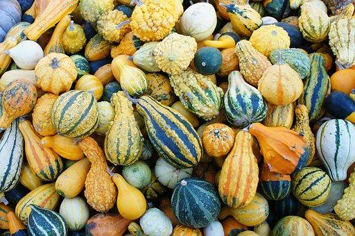 Pumpkin, Garden Pumpkin, Vegetables, Food, Bio, Healthy