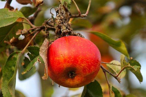 Apple, Red, Depend, Red Apple, Fruit, Vitamins, Fresh