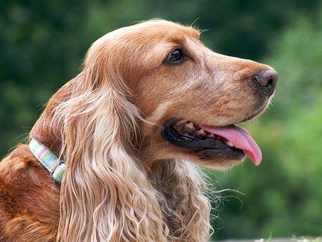 Dog, Loyalty, Animal, Dear, Friendly, Gentle