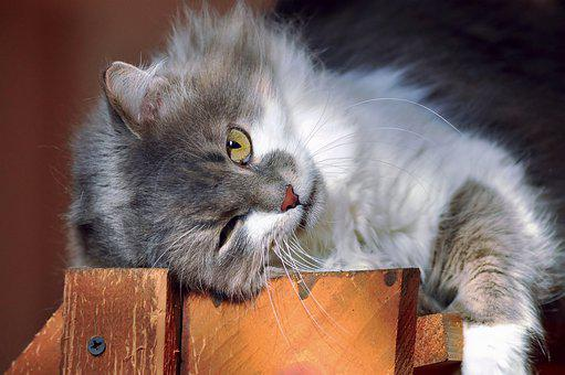 Cat, Eye, Furry, Grey, White, Lie, Sun, Bask, Watch