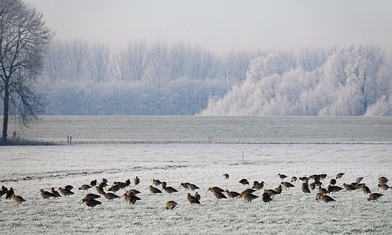 Winter, Snow, Ice, Winter Landscape, Birds, Frozen