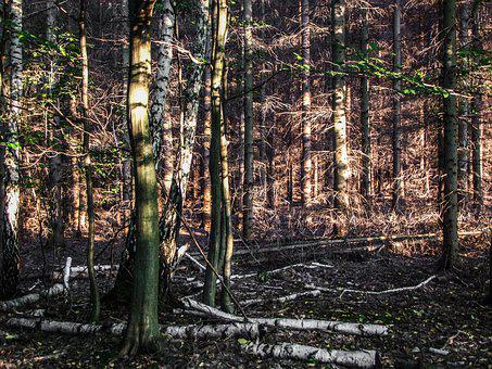 Forest, Sunlight, Trees, Wood, Nature, Mood, Lying
