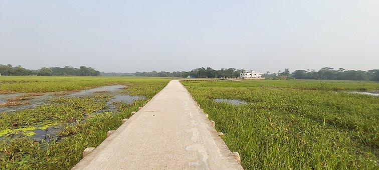 Path, Road, Gr, Nature, Landscape, Trees, Grass