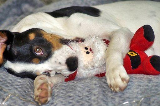 Christmas, Dog, Nicholas, Nice, Cute, Pet, Winter