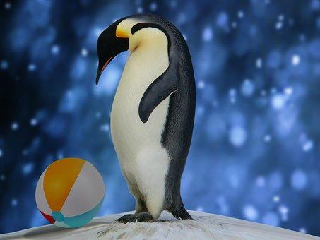 Penguin, Ball, Portrait, Play, Baby, Photomontage