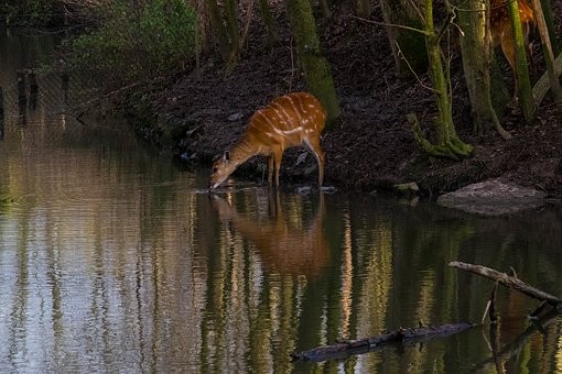 Animal, Drink, Water, Reflection