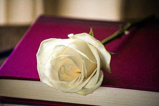 Rosa, Book, Flower, Romantic, Books, Reading