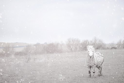 Pony, Horse, Winter, Cold, Snowflakes, Frosty, Sweet