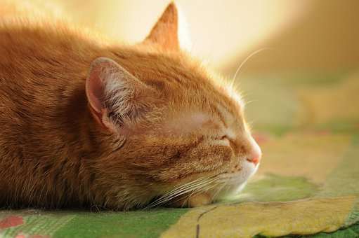 Cat, Dream, Quiet Hours, Sleep, Day, Sunny, Shadow, Mat