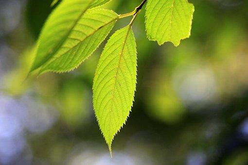 The Leaves, Backlight, Nature, Green, Plants, Leaf