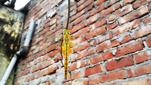 Dragonfly, Fly On Wire, Resting, Top Of Bug, Bug