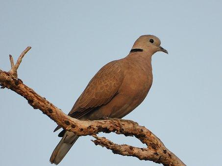 Birds, Cuckoo, Animals, Tree Branches, Daytime, Nature