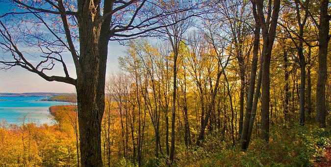 Fall, Autumn, Trees, Leaves, Nature, Forest, Tree