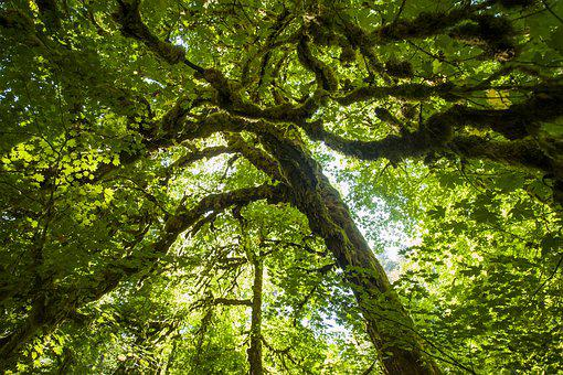 Tree, Green, Moss, Nature, Forest, Landscape