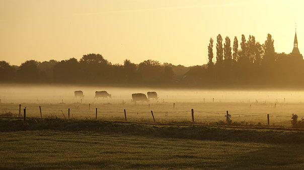 Late Summer, Fog, Cows, Oxen, Landscape, Trees, Sunrise