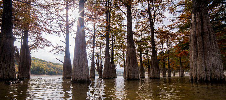 Cypresses, Swamp, Lake, Dawn, Water, Succo, Autumn
