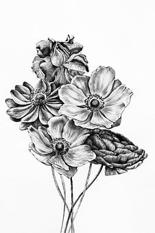 Black And White, Bunch, Of, Flowers, Drawing, Drawings