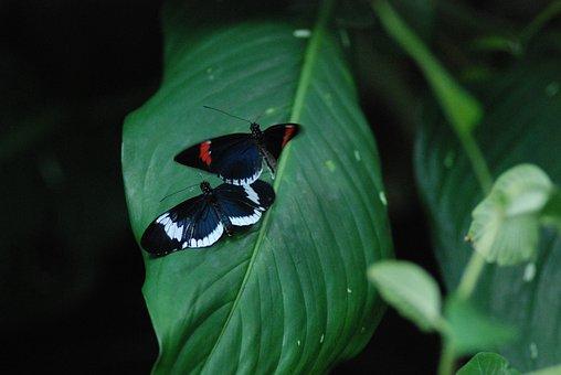 Butterflies Mating, 2 Of 10, Making Out, Butterflies