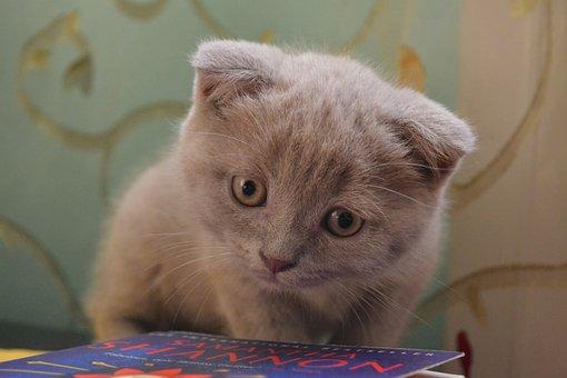 Cat, Kitty, Kitten, Pet, Feline, Animal, Adorable