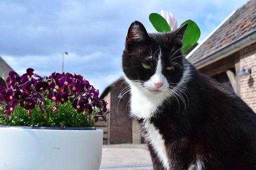 Cats, Cat, Summer, Pet, Animals, Animal, Feline