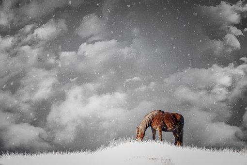 Horses, Haflinger, Animal, Winter, Clouds, Snow