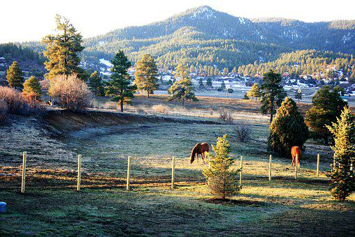 Colorado, Evening, Horses, Sunset, Rural, Trees