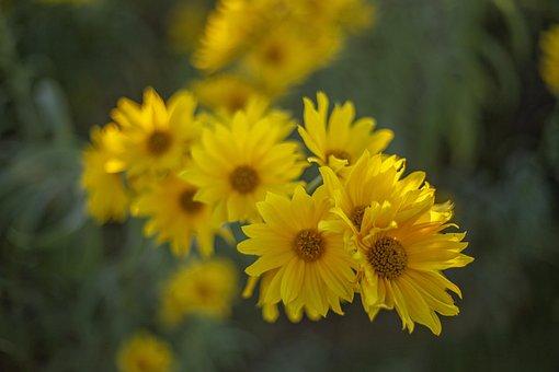 Yellow Flower, Fresh, Ascent, Fall, Flower Field