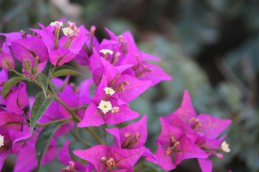 Flowers, Purple, Bloom, Nature, Plant, Lavender, Garden