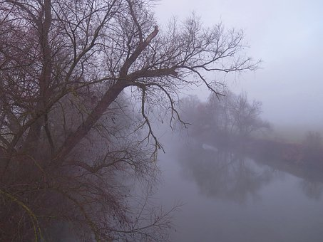 Fog, River Floodplain, Autumn, Winter, Neckar, Bank