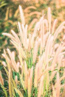 Flowering Grass, Nature, Mead, Outdoor, Grass