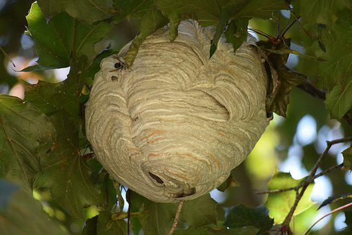 Nest, Bees, Hive, Hornets, Beehive