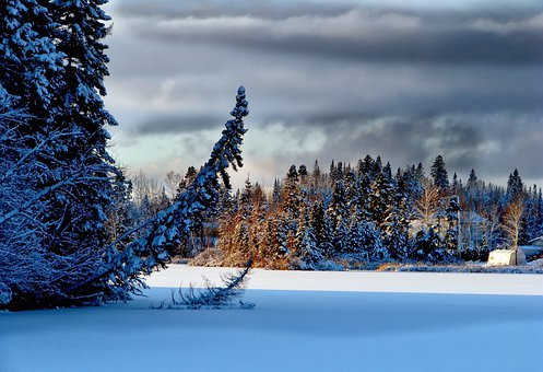 Landscape, Nature, Snow, Sky, Clouds, Trees, Fir, Wood