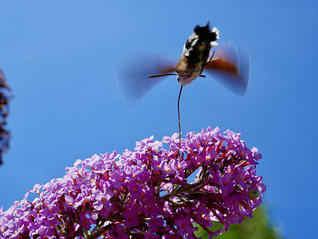 Summer, Insect, Butterfly, Nature, Flower, Close Up