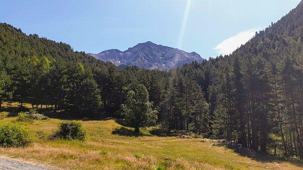 Natural Park Posets-maladeta, Nature, Trees, Forest
