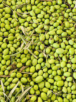Olives, Oil, Food, Oliva, Kitchen, Sano, Green, Eat