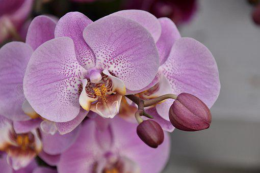 Flower, Orchid, Pink Flower, Pink Orchid, Nature Offer