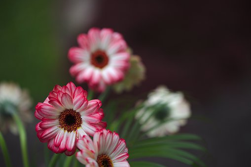 Flowers, Garden, Nature, Summer, Plant, Petals