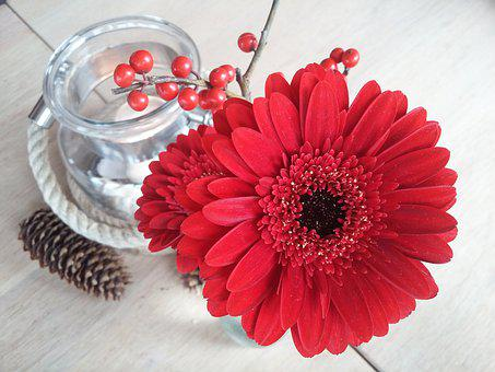 Gerbera, Flower, Red, Candle, Plant, Blossom, Bloom