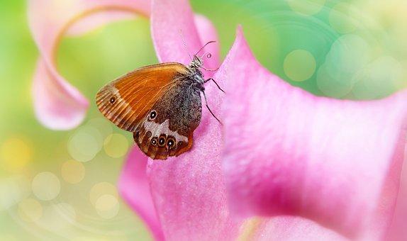 Strzępotek Perełkowiec, Female, Butterfly Day, Nozzle