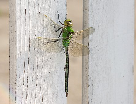 Dragonfly, Insect, Wing, Transparent, Relax