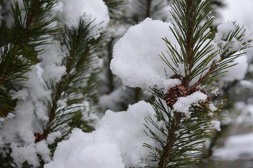 Winter, Snow, Conifer, Winter Magic, White, Frozen