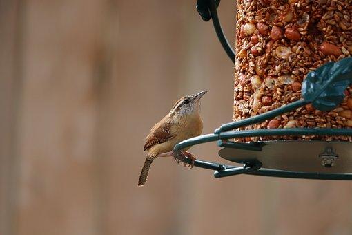 Wren, Bird, Bird Feeder, Cute, Brown, Wildlife, Animal