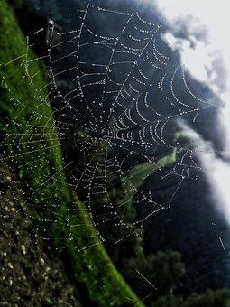 Cobweb, Rain, Forest, Hiking, Mountains, Drip, Wet