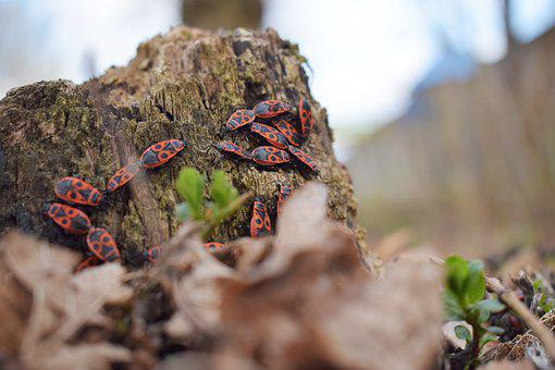 Insects, Insects Red, Forest, Nature, Insect, Colorful