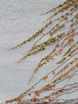 Vines, Leaves, Vine, Ivy, Pattern, Plant, Creeper, Leaf