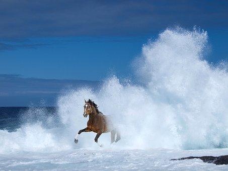 Horse, Water, Sea, Lake, Waves, Game, Joy, Summer