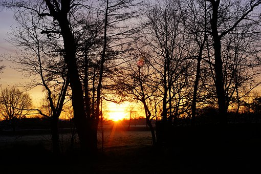 Morgenrot, Winter, Landscape, Cold, Mood, Trees
